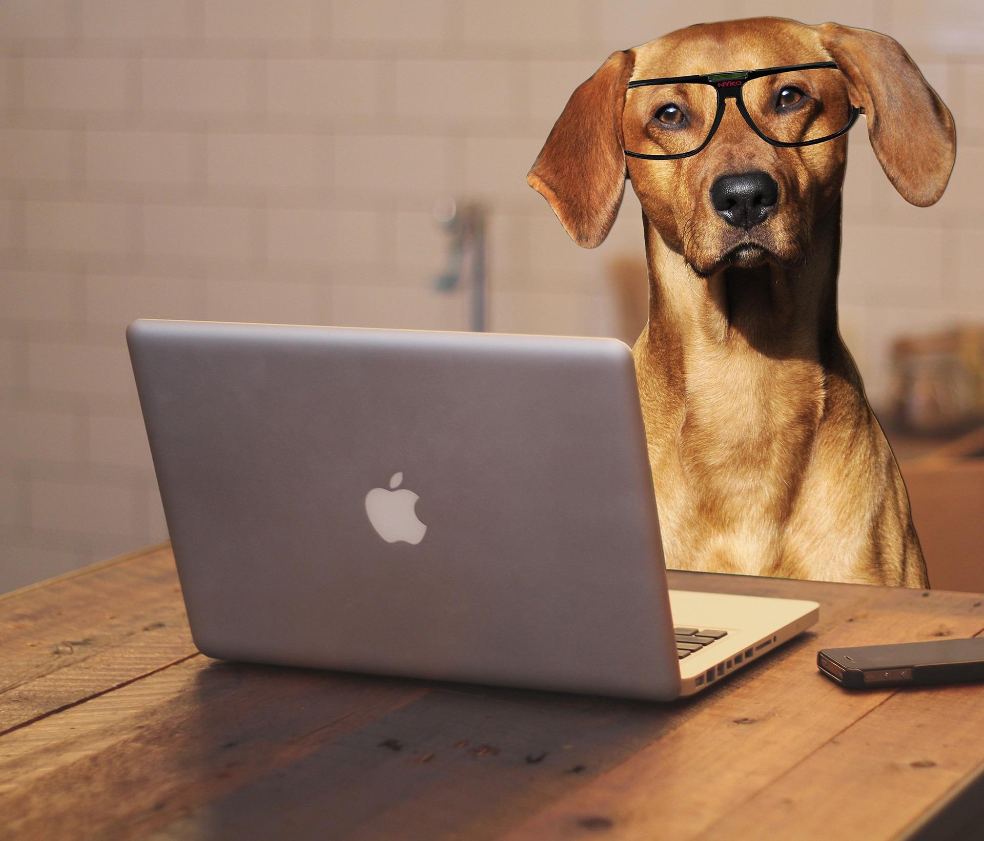 Internet Marketing Tricks That Petting A Dog Can Teach You