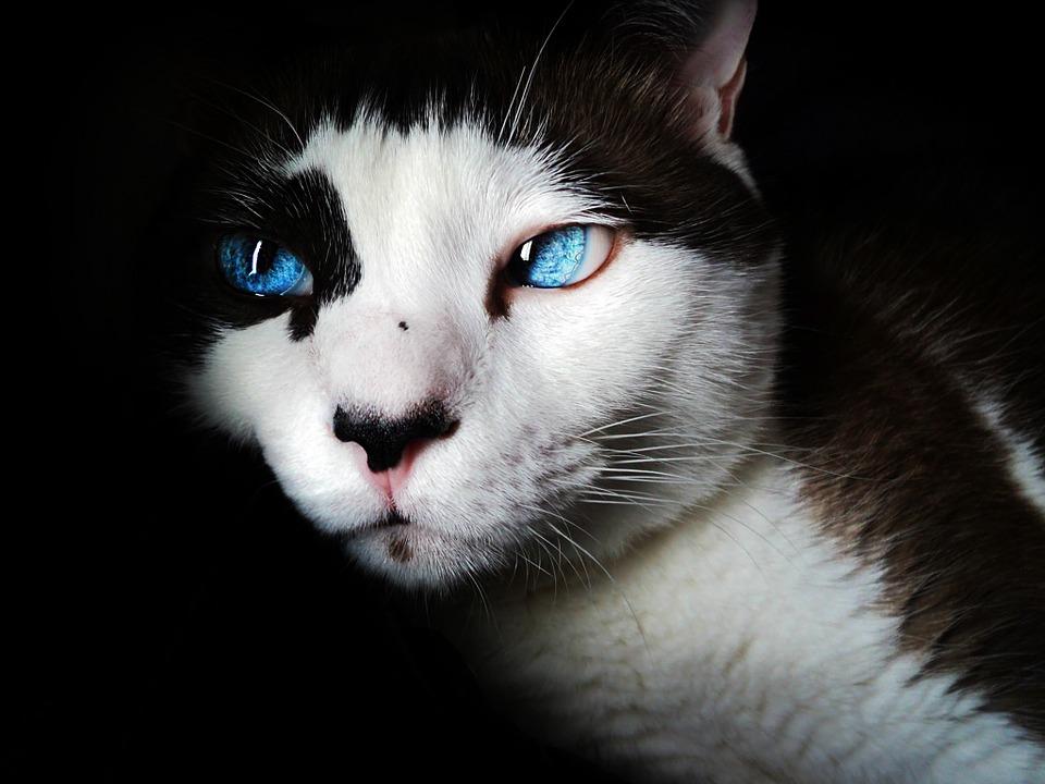 Why Pet Brands Need Digital Marketing Hacks